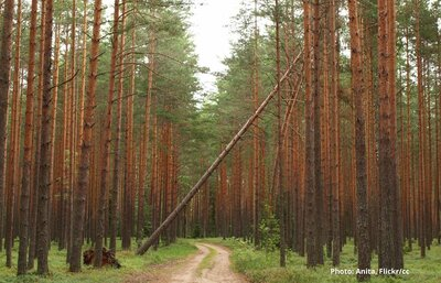 Estonian forest politics in 2020: conflict intensifies