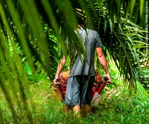 Could the palm oil arrangement between Indonesia and Switzerland offer lessons for EU and Indonesia free trade agreement negotiations?