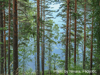 Finland's forestry myth undermines its radical climate ambition