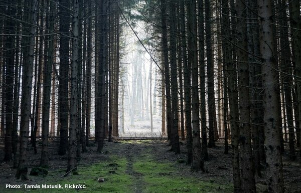 Hungarian Constitutional Court's landmark ruling is a blow to intensive forest management practices