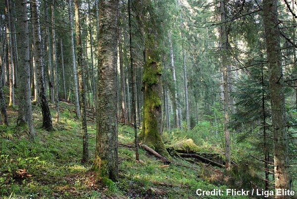 European Commission faces major hurdle to protect and restore forests