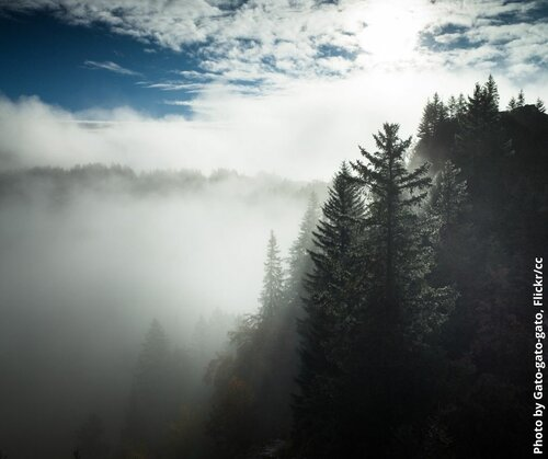 Forests and climate in the EU: trading pollution reduction for forest ambition