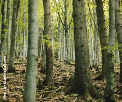 The European Green Deal promises an EU of bigger and better forests: The Taxonomy Regulation makes it impossible