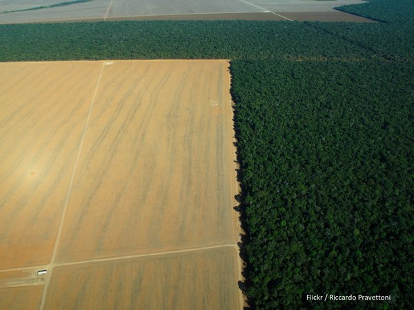 EU-Mercosur deal sacrifices forests and rights on the altar of trade