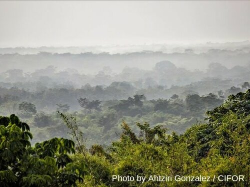 Here's how CAFI's $65 million can help save Congo's forests