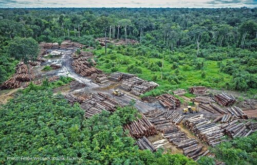 Why is it important to fight illegal logging? - FAQ