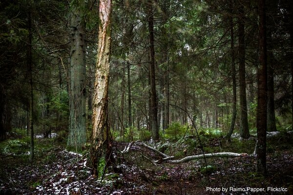 Beyond LULUCF: Legal cover for a shrinking EU forest sink