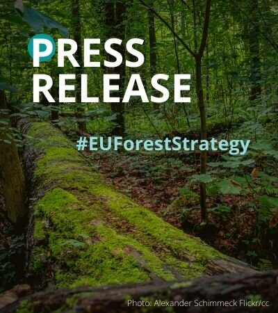 European Parliament Own Initiative report on the EU Forest Strategy – nature loses, industry wins again