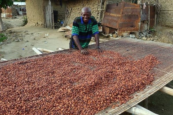 Paving the way: learning from Ghana's VPA process to help meet cocoa commitments