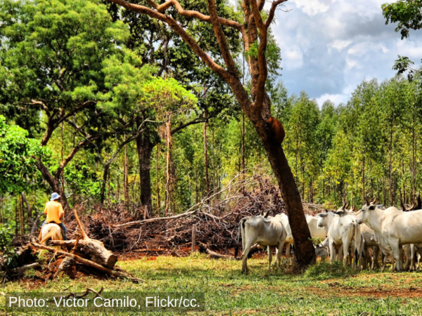 Mercosur trade deal heightens risks to forests and human rights