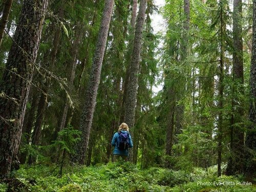 Sweden: taking forestry back to the future