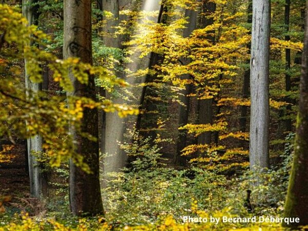 France's forest strategy: fighting to end the climate crisis or to increase logging?