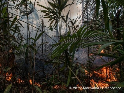 The Amazon and the Congo Basin: the same threats, the same battles