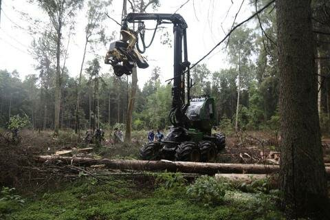 Białowieża forest struggle is symptomatic of a greater ill