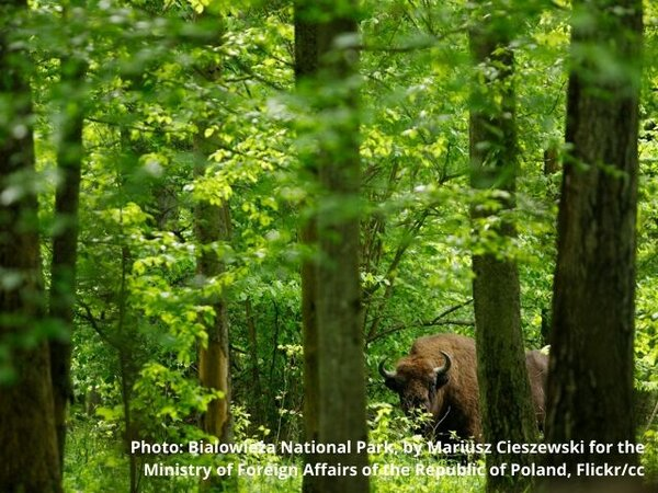 What the EU Biodiversity Strategy and Climate Law mean for European forests