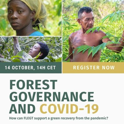 Forest governance and COVID-19: How can FLEGT support a green recovery from the pandemic?