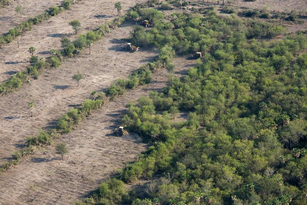 European Commission announces action on deforestation