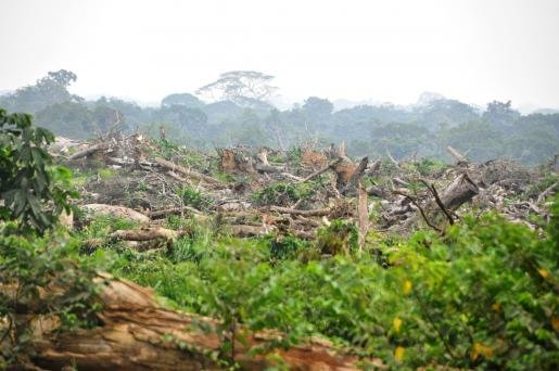 MEPs vote in favour of Own Initiative Report on Palm Oil and Deforestation of Rainforests