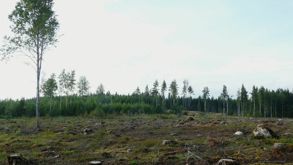 A 'Just Transition' for European Forestry is needed