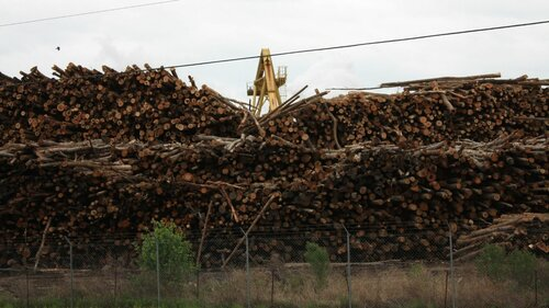 New European Commission research reveals bioenergy's bleak impact on forests