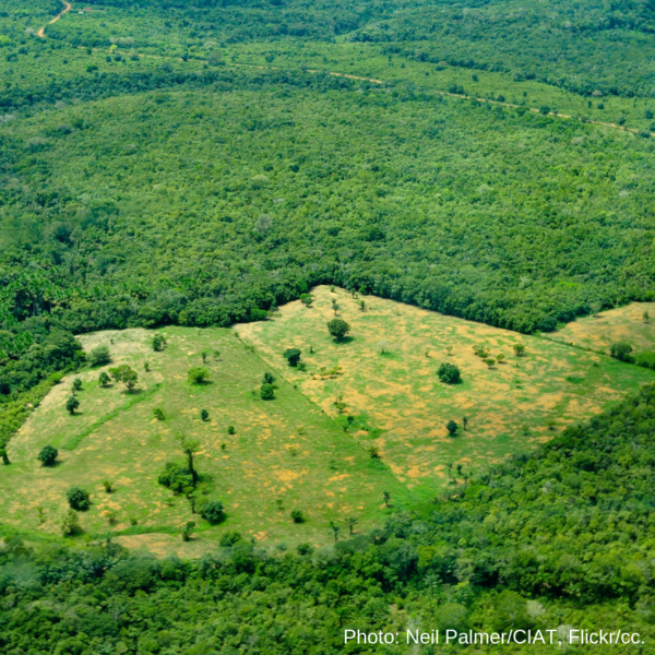 Global deforestation becoming one of the top issues in the European elections