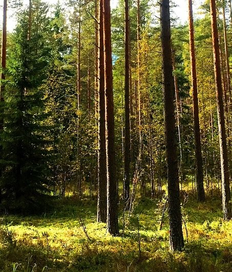 Finland endangers climate leadership position in EU