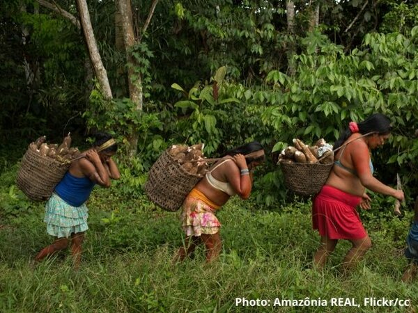 The EU must use trade levers to halt Brazil's assault on forests and peoples