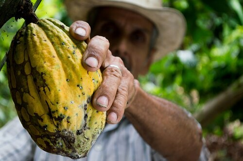 World Cocoa Conference: Fix cocoa production's bitter aftertaste with regulation