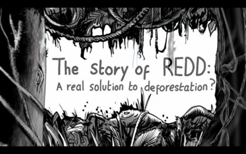 The Story of REDD: a real solution to deforestation?