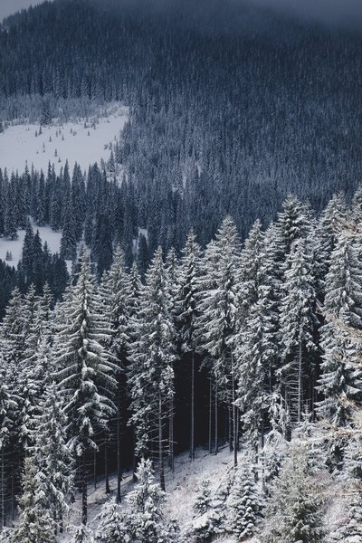 Forestry emissions and the EU's risky LULUCF debate