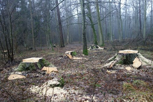 The promise of better times for Białowieża Forest