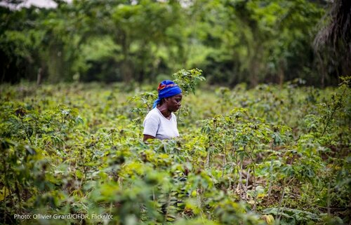 Republic of the Congo: Forest code and climate plans are both a cause for hope