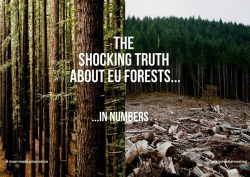The shocking truth about EU forests in numbers