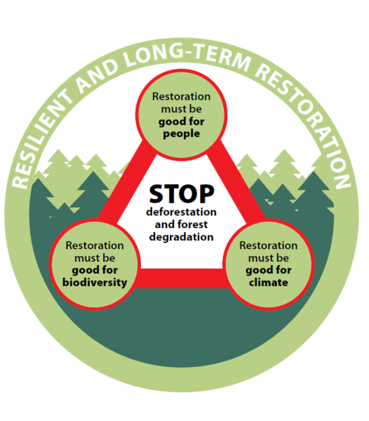 Overarching principles for rights-based forest restoration