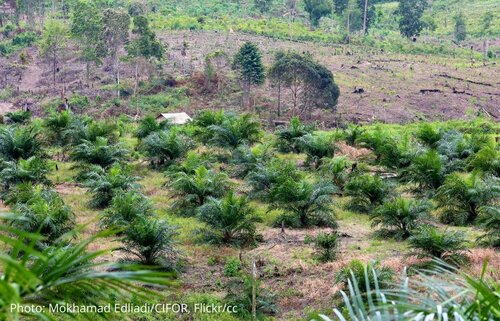 Indonesia's new Omnibus Law increases risks to people and forests