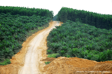 ASEAN and EU create group to explore palm oil sustainability issues