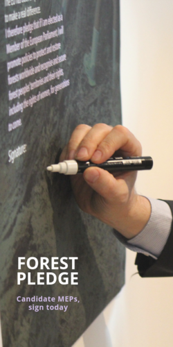 50+ forest experts and NGOs ask EU candidates to stand for forests