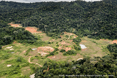 Montagne d'Or Mine: France needs to walk the talk on halting deforestation in the tropics