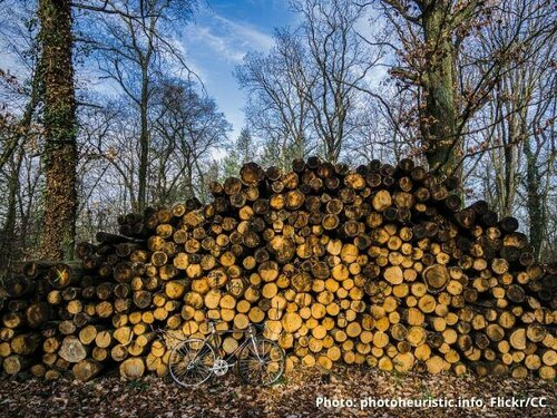 Public debate on biomass reaches critical mass in the Netherlands