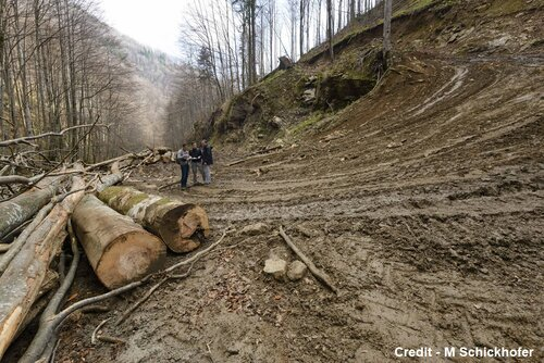 NGOs submit complaint regarding long-term destructive logging in Romania