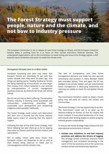 The Forest Strategy must support people, nature and the climate, and not bow to industry pressure