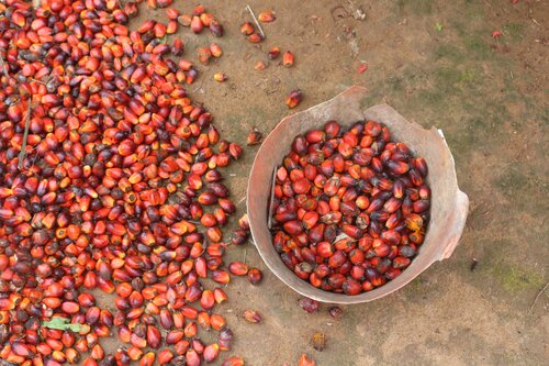 The village women taking on the palm oil giant