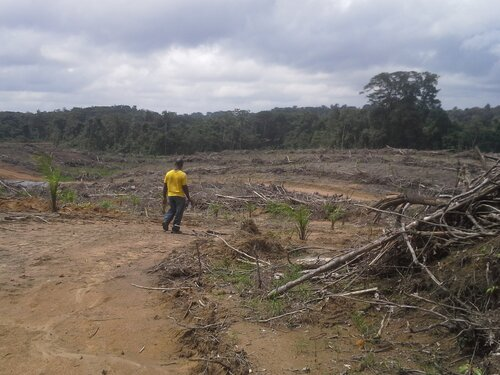 EU scheme to protect tropical forests should not be scrapped