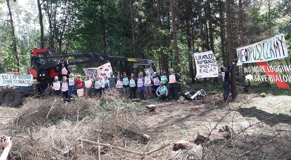 Blog: Białowieża forest struggle is symptomatic of a greater ill