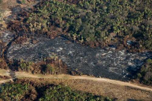 A critical moment in the fight against deforestation