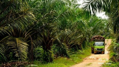 Could EU-Indonesia free trade deal end palm oil conundrum?