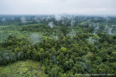 European Commission launches consultation on deforestation
