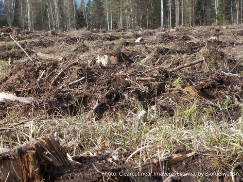 Estonia discards the impact assessment of its Forestry Development Plan