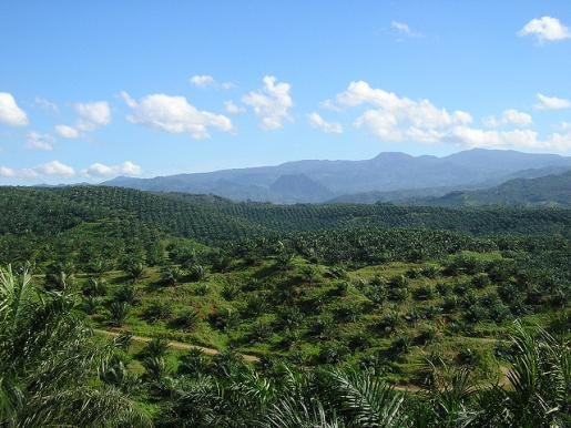 Call for tenders: Study and Seminar on EU initiatives ensuring EU imported Indonesian palm oil isn't associated with deforestation and human rights abuses