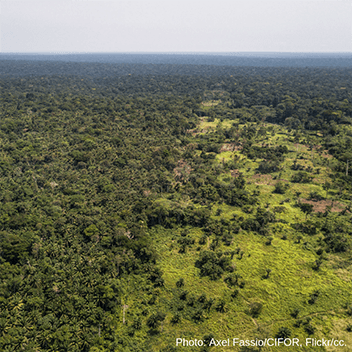 Huge illegal forest trade deal in Democratic Republic of Congo: urgent EU action is required